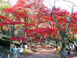 池田山_秋の紅葉
