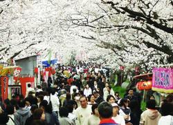 墨俣_桜まつり