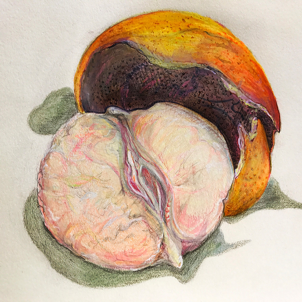 Grapefruit_1000.jpg