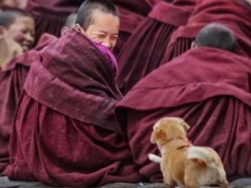 Meditating on Bodhicitta
