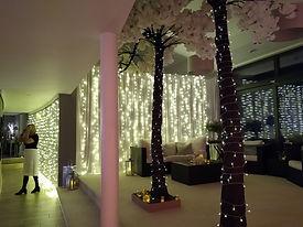 Trees & Fairy Lights.jpg