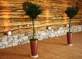 two bay trees in the barn.jpg