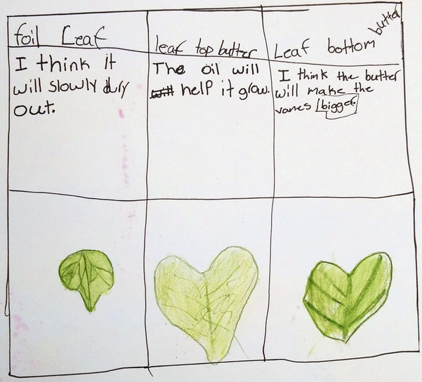 Predicting and documenting how the leaves are affected by being covered with aluminum foil or butter