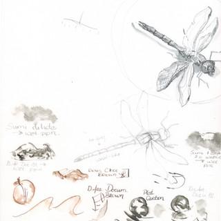 dragonfly%20process1_edited.jpg