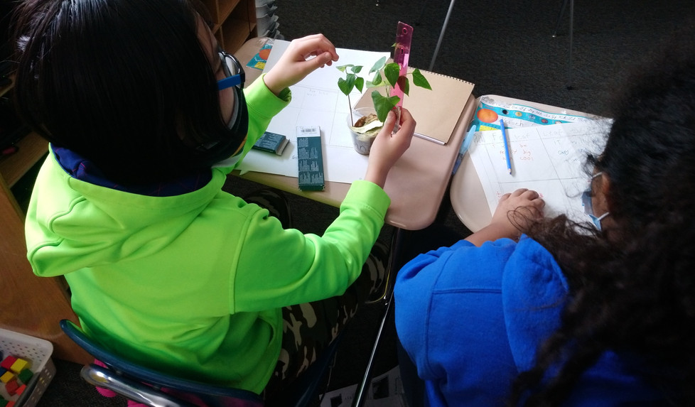 Measuring daily growth