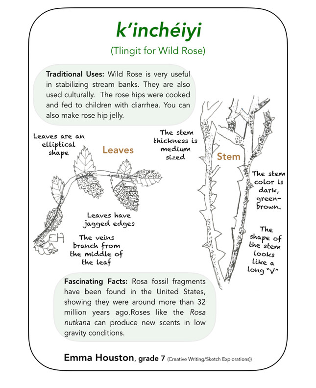 Middle School Field Guide after Sketch E