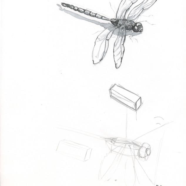 dragonfly%20process2_edited.jpg