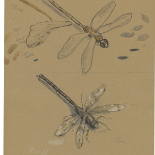 dragonfly process3.jpg