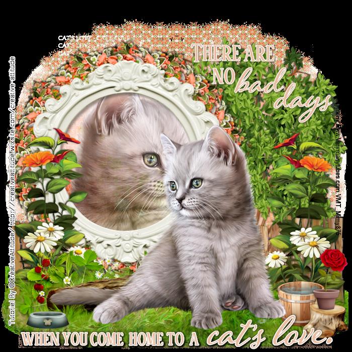 Cat's love 2019.png
