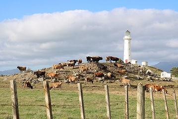 lighthouse-4248170_960_720.jpg