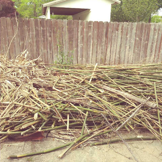 New Orleans Brush and bamboo removal