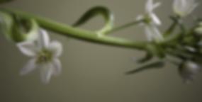 massage flowers