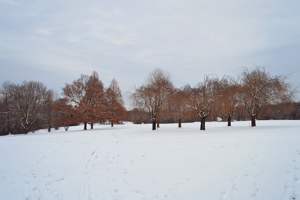 The fields of Media PA's Rose Tree Park are softly covered in snow every winter.