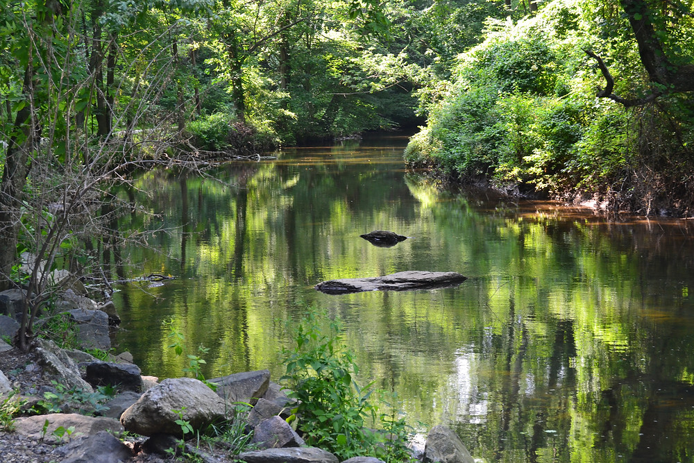 Pond located in Media PA's Ridley Creek State Park sits serenely still, the green foliage surrounding it reflected in the smooth surface of the water.