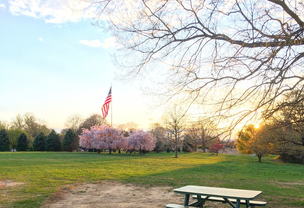 This lovely picnic space is one of the many attractions located in Media PA's Rose Tree Park.