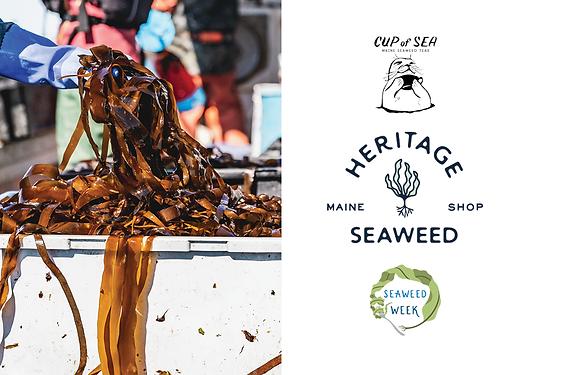 Seaweed image.png