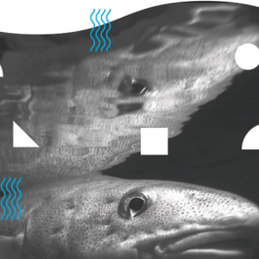 The First 100% Fish Article Published by Arctica Finance and Iceland Ocean Cluster