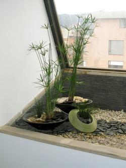 interior-garden-despues-daylight2