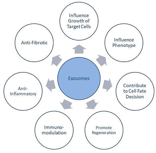exosomes.jpg