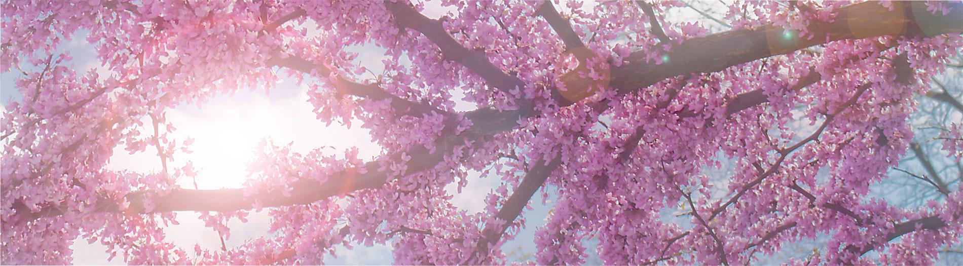Blooming Sky