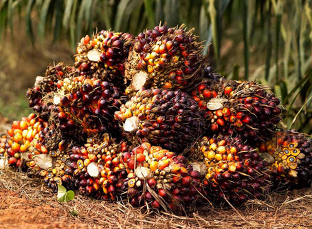 Malaysia End-Sept Palm Oil Stocks Up 1.2%, Output Rise Lower-Than-Expected