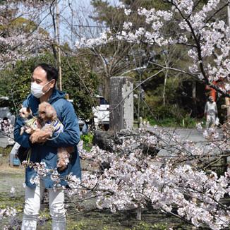 Fukuoka: Lockdown? What lockdown?