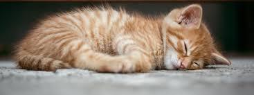 Как скандинавците спят? (3 странни навика)