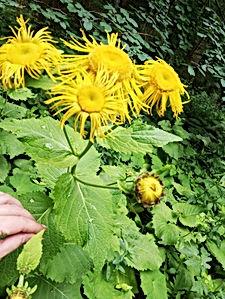Blumen 1.jpg