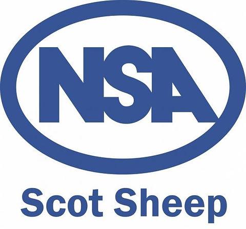 scot sheep.jpg