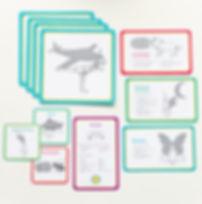curriculum image.jpg