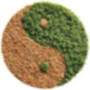 Yin Yang Website.jpg