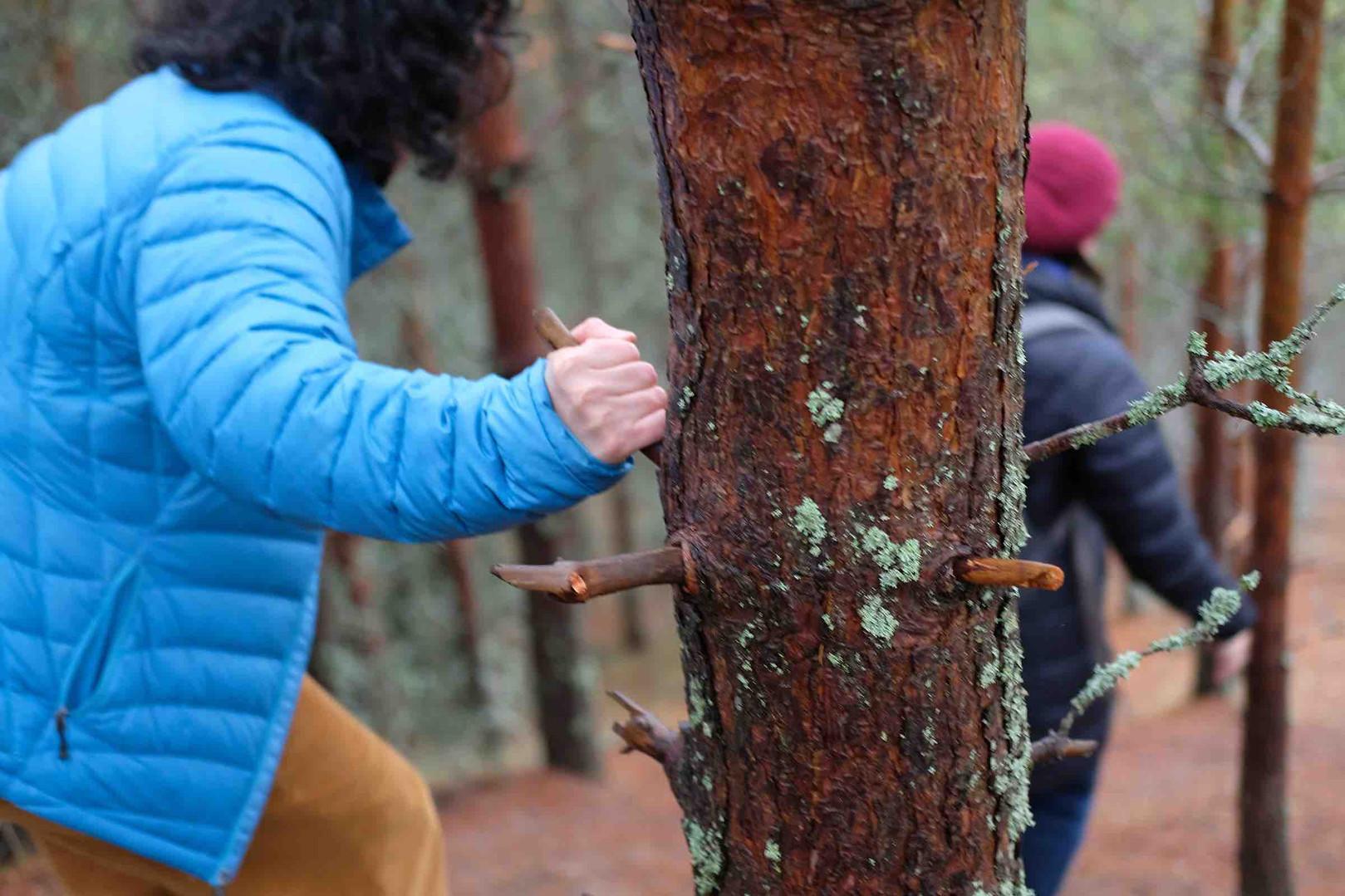 On Agnes Denes' Tree Mountain