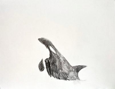 orca_10 copy.jpg