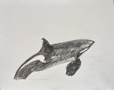orca_07 copy.jpg