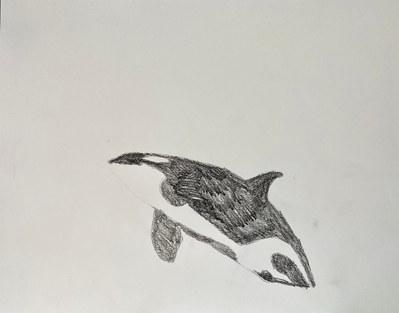 orca_03 copy.jpg