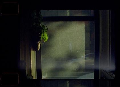 window_film_site.jpg