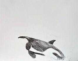 orca_09 copy.jpg