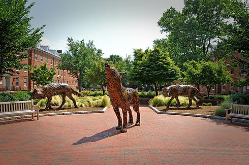 nc state wolves pic.jpg