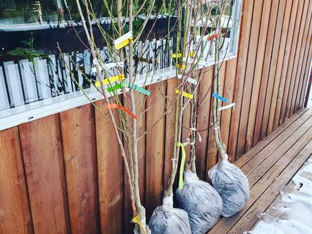 Fruit Trees Part 2