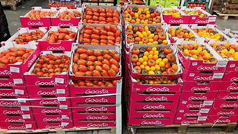 Tomates Goosta Lomme Primeurs