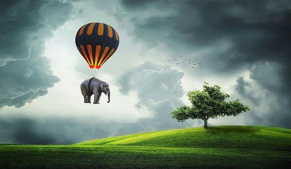 elephant-3458033__340.jpg