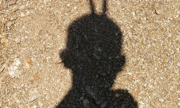 shadow-536__340.jpg