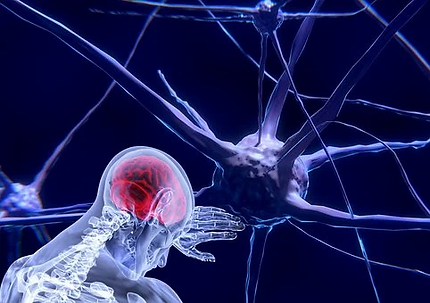 neurons-3743011__340.webp