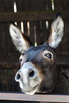 donkey-3636234__340.jpg