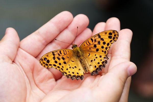 butterfly-4396444_1920.jpeg