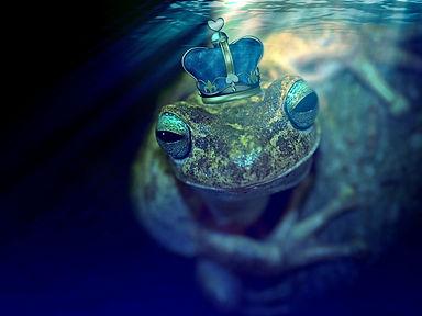 frog-2257133_1920.jpg