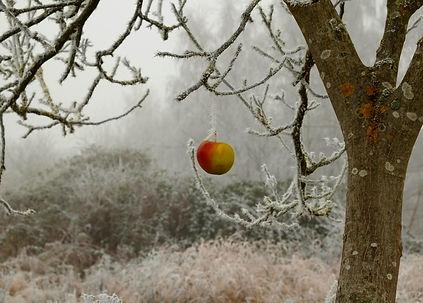 winter-2186459_1920.jpg