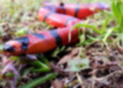 snake-2125777_1920.jpg
