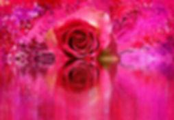 rose-2073860_1920.jpg
