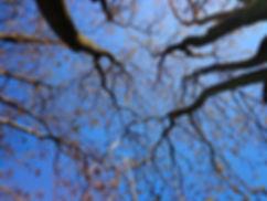 tree-439171_1920.jpg